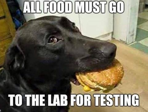 dog eating a cheeseburger