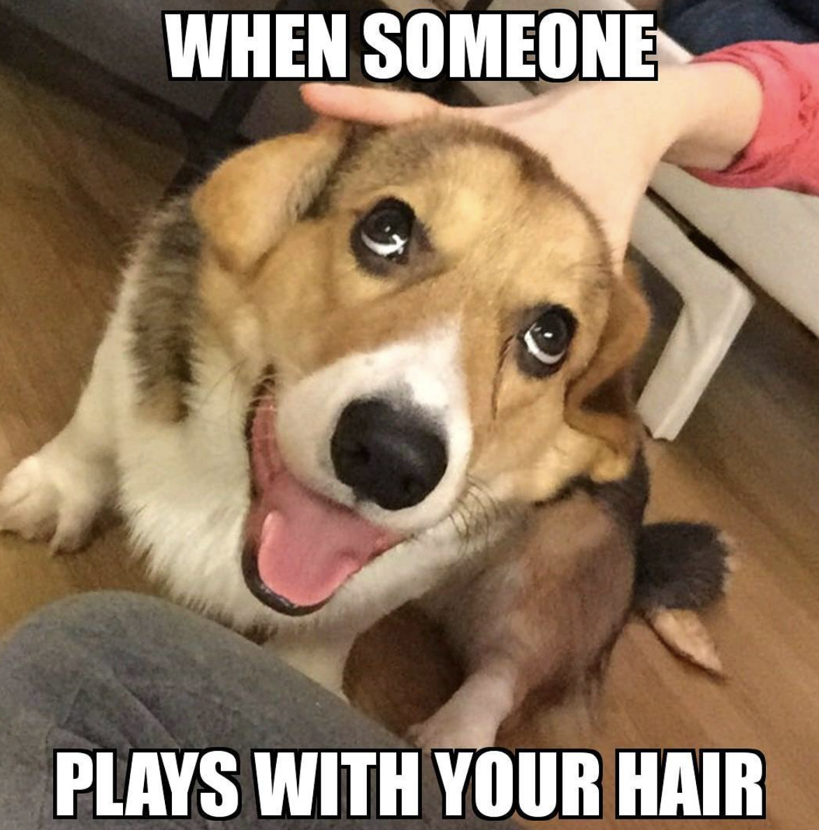 Dog petting meme