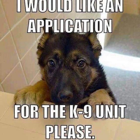 K9 puppy meme