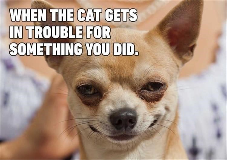 Chihuahuameme