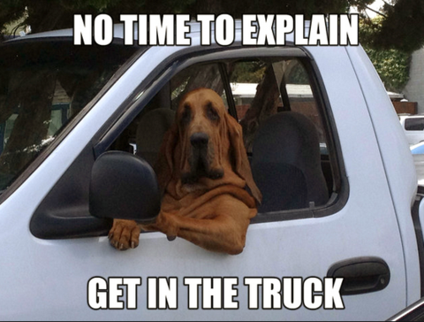 Dog driving a truck