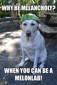 Dog with a watermelon on his head